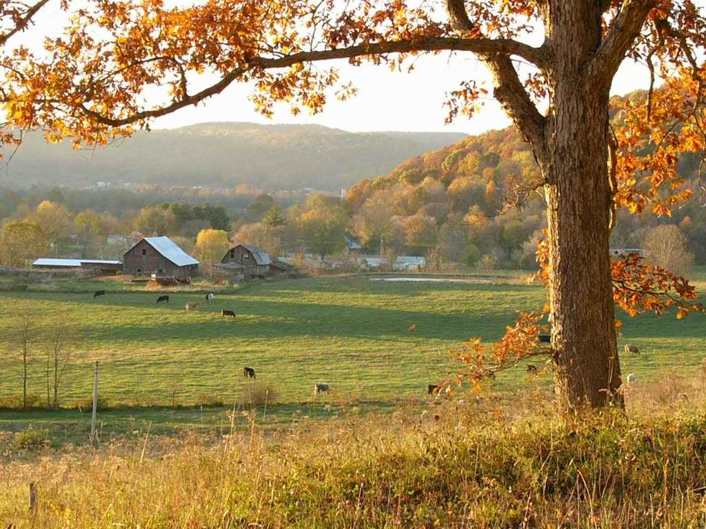 jesen-fall-autumn-priroda-nature-wallpaper