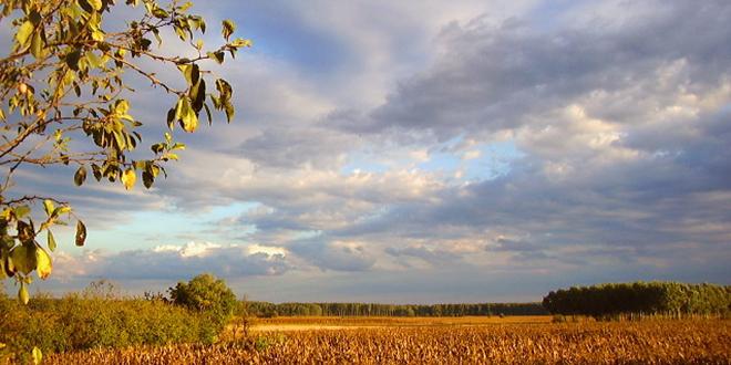 jesen polje
